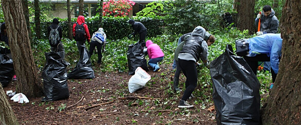BC volunteers remove invasive plants from Robinswood Park on BC Cares Day