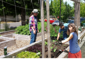 Karrin Peterson working in the Bellevue College Community Garden with students -