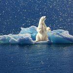 Polar bear in a melting iceberg