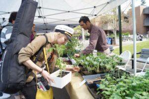 Showcasing our farmers market plant sale