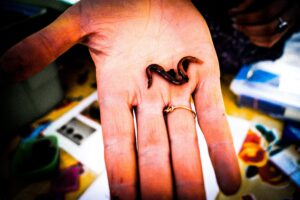 Showcasing a worm on a hand