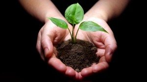 Hands-Hold-Small-Tree-Soil-300x168