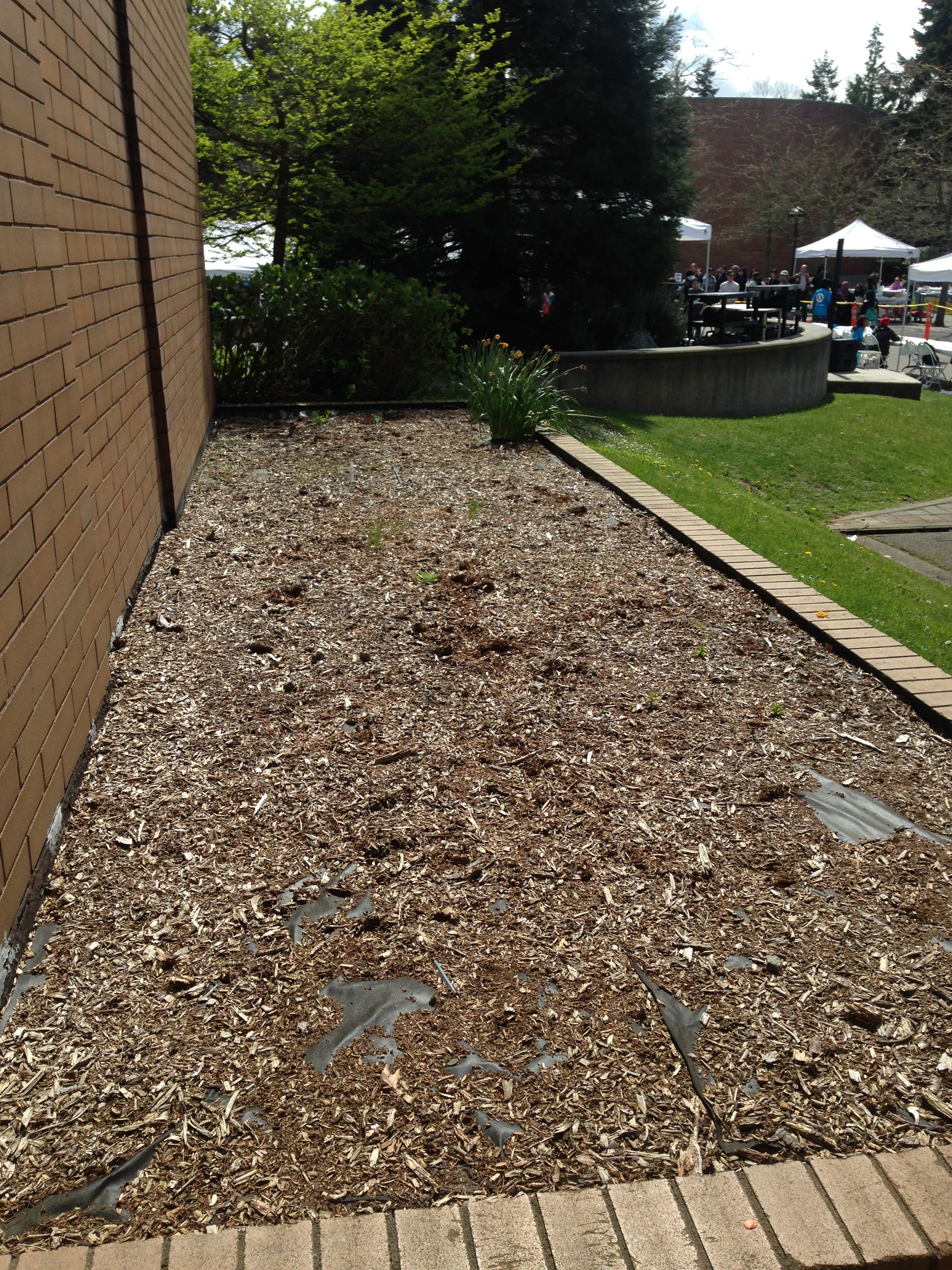 BC bed for replanting :: Sustainability