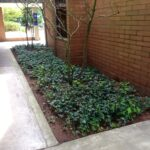 shaded BC flower bed ready to replant with native plants