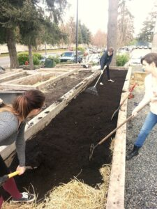 Bellevue College students plant the new student garden