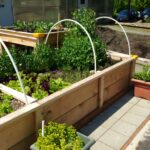 IDEA Garden in May growing