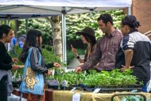 Farmers-market-Plant-sales-cropped
