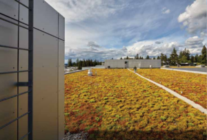 Image of the T Building's Green Roof.