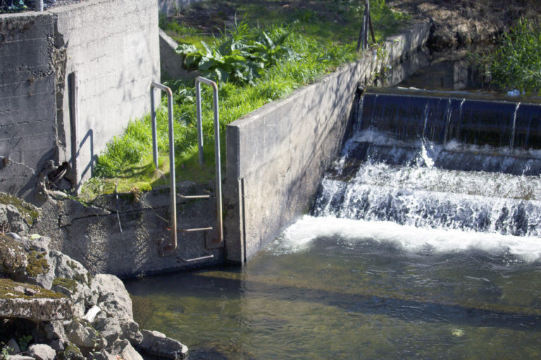 The habitat of the salmon conservation in issaquah