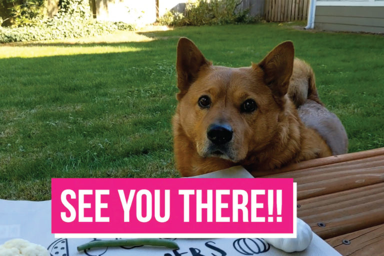 A Dog outside with the text See you there