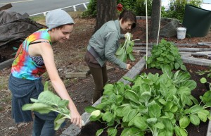 Students Learn from Community Garden