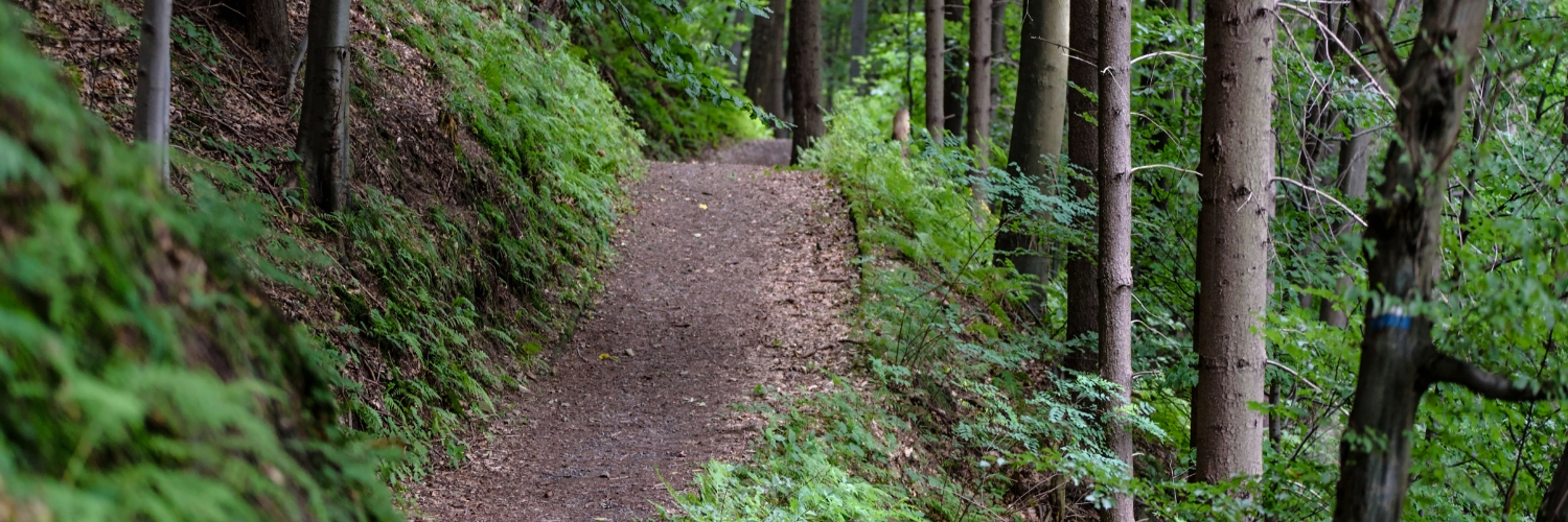 King County Backcountry Trails