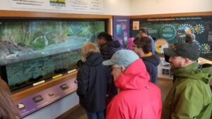 Faculty examine a salmon display