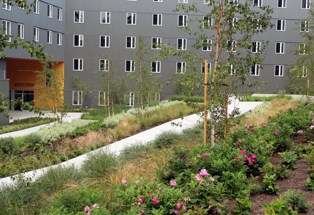 Pathway leading through the rain garden by Student Housing